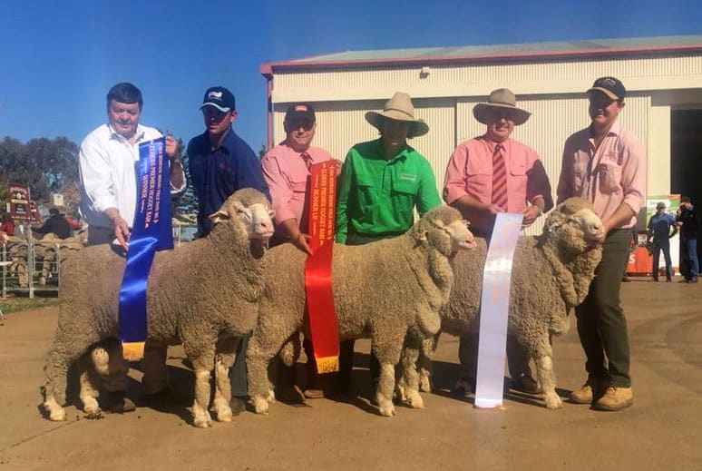 Second & Third winners of the Elders Midstate Field Day Hogget Ram Competition